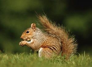 Tulsa Squirrel Removal